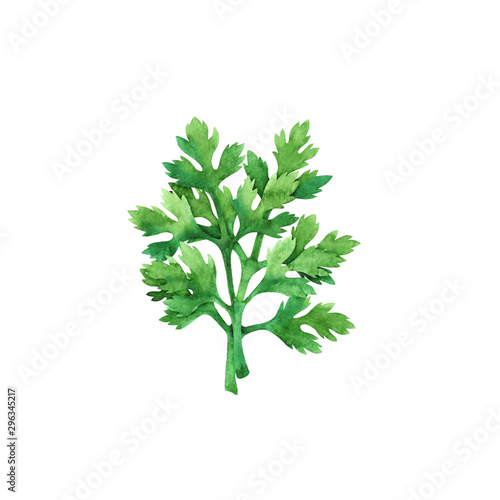Fotografie, Tablou Isolated watercolor fresh parsley