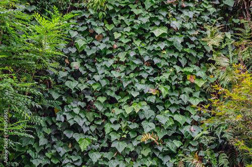 葉っぱの装飾 Wallpaper Mural