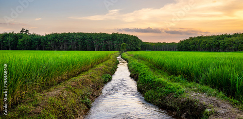 Montage in der Fensternische Beige Rice field rural panorama with colorful of sky in twilight
