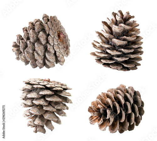 Fototapeta  Set of Christmas tree cones closeup on a white, isolated.