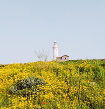 Landscape With Yellow Flowers On Meadow With Lighthouse Behind