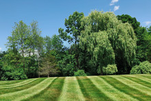 Scenic View Of Lawn