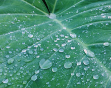 High Angle View Of Dewdrops On...