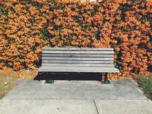 Empty Wooden Bench In Front Of Flowering Bush
