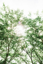 Low Angle View Of Sunshine Through Trees