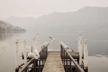 Seagulls On Pier By Lake On Fo...