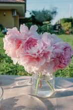 Bouquet Of Pink Flowers In The...