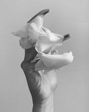 Close Up Of Woman's Hand Holding Flowers