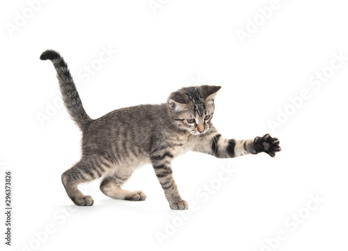 Obraz Cute tabby playing on white - fototapety do salonu