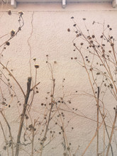 Dead Flowers On Branches Next ...