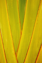 Close Up Of Overlapping Palm F...