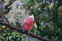Close Up View Of Parrot Sitting On Tree Branch