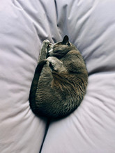 Close Up Of Cat Sleeping On Pillow