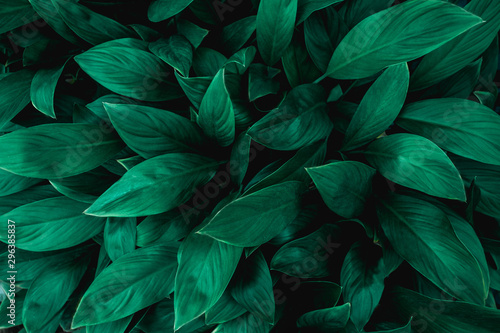 Fototapete - tropical leaves, abstract green leaves texture, nature background