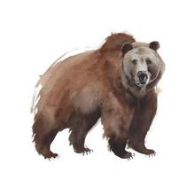 Bear Standing Mammal Forest An...