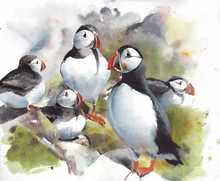 Puffin Northern Bird Nesting F...
