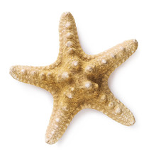 Large Starfish Isolated On Whi...