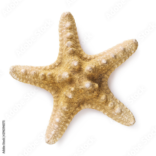 Fotografie, Obraz Large starfish isolated on white background, top view