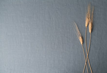 Wheat Stalks On Steel Blue Linen With Extra Space For Text