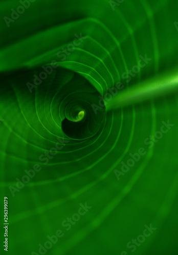 Curling Green Leaf Full Frame Background Image