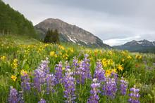 Mt. Gothic Flowers