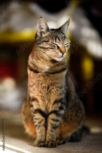 Beautiful Cat Enjoy Sunrays At a Living Room