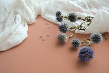 Macro Shot Photo Of Natural Cotton Gauze, Dry Blue Eryngium Planum And Violet Lavender Flowers On Soft Pink Blurred Background. Texture Of White Fabric. Cheesecloth Art Concept Composition Clipart