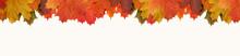 Autumn Maple Yellow-orange Lea...