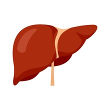 Human Liver Icon. Flat Illustr...