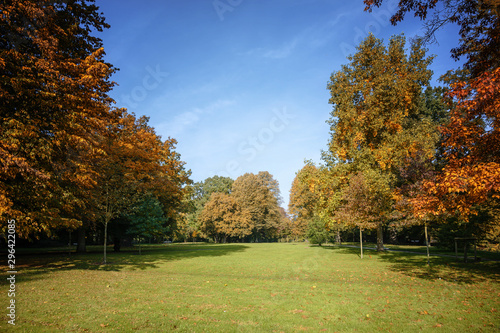 Fototapeta various beautiful autumn trees with colorful leaves in an old park, seasonal nature background with copy space obraz