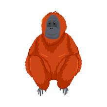 Cute Orange Orangutan Monkey S...