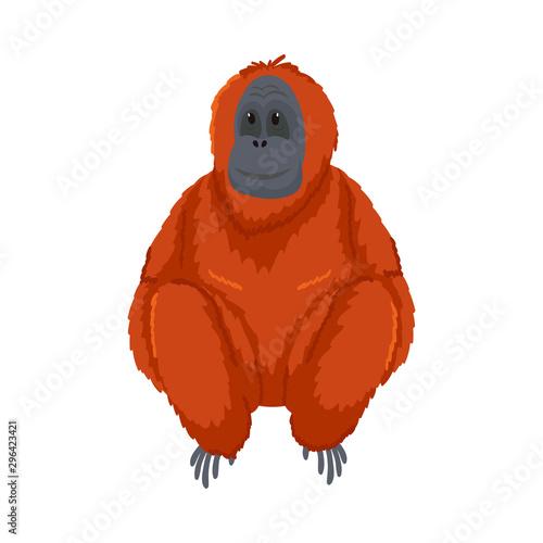 Cute orange orangutan monkey sitting. Vector illustration isolated on white background Fotomurales
