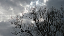Dark Clouds Cover Sun Rays Lightning On Serene Sky And Isolated Empty Tree
