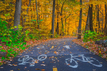 Autumn Landscape Of Bicycle Lane Sign On Asphalt Road In The Park