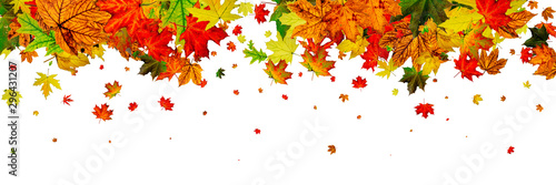 Fotobehang Herfst Autumn leaf pattern. Season falling leaves background. Thanksgiv