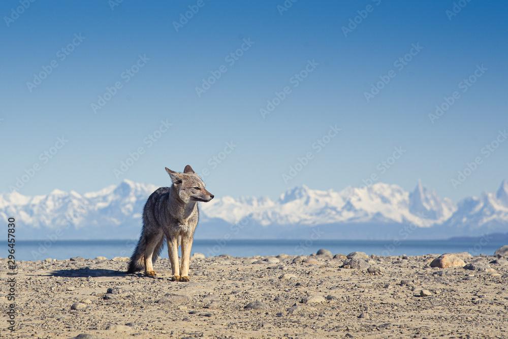 Fototapeta el zorro y las montañas