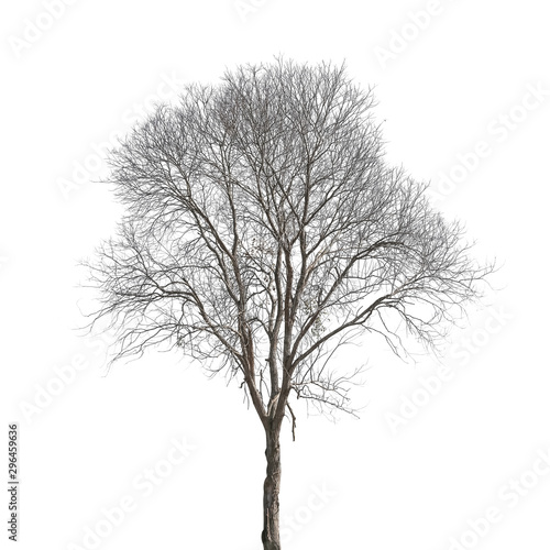 Dead tree isolated on white background Fototapete