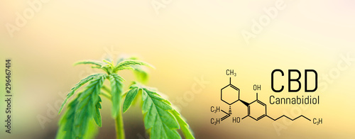 Photo  Cannabis leaf marijuana, CBD Chemical formula, beautiful background, concept for