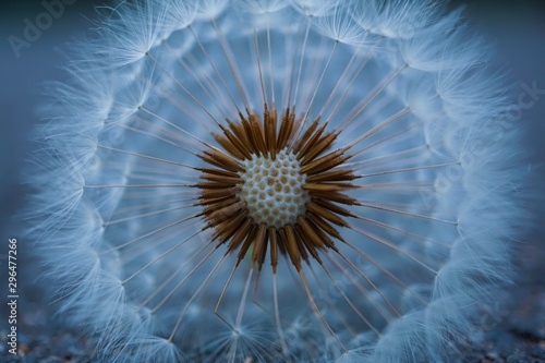 Fotografie, Obraz  beautiful dandelion seed in autumn in the nature