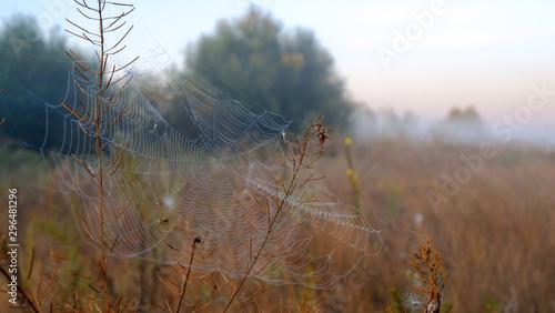 Spider web with dew drops closeup at summer morning sunrise, river Vorskla, Ukraine #296481296