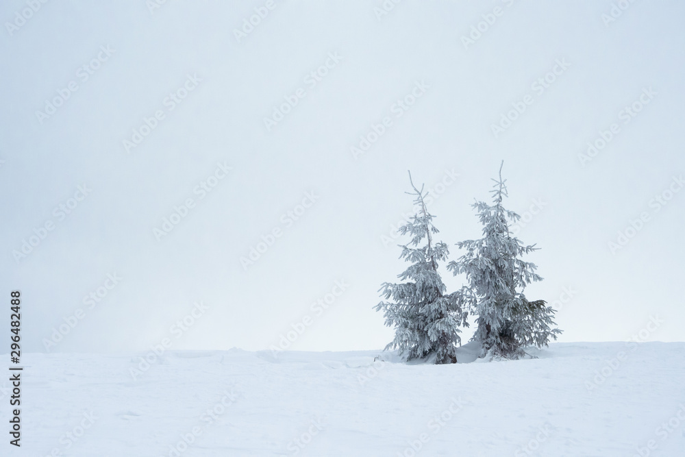 Fototapety, obrazy: Beautiful Winter Mountain Landscape with Snow Covered Fir Trees in the Morning.