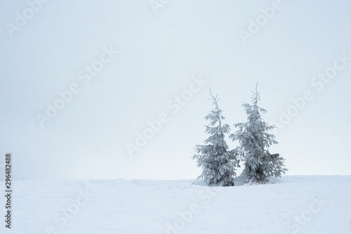 Fotografía  Beautiful Winter Mountain Landscape with Snow Covered Fir Trees in the Morning
