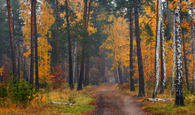 Forest. Autumn Painted Leaves ...