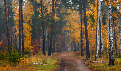 Panel Szklany Las Forest. Autumn painted leaves with its magical colors. Beauty. Light fog gives the landscape a mystery.