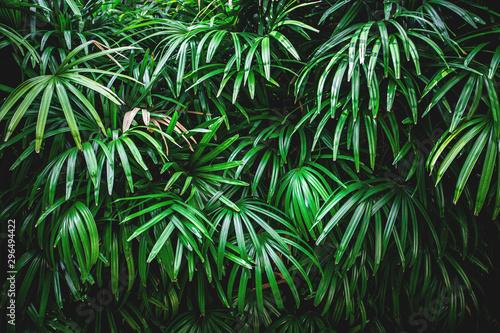 streszczenie-tekstura-zielony-lisc-tlo-wzor-przyrody-tropikalny-lisc