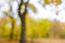 Water Drops On The Window Pane, In Backround Colorful Patches - Autumn Trees, Park - Defocused.