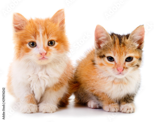 Two small kittens isolated. Wallpaper Mural