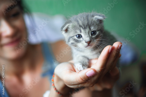 Photo kitten sitting on the palms of the girl in the blue shirt