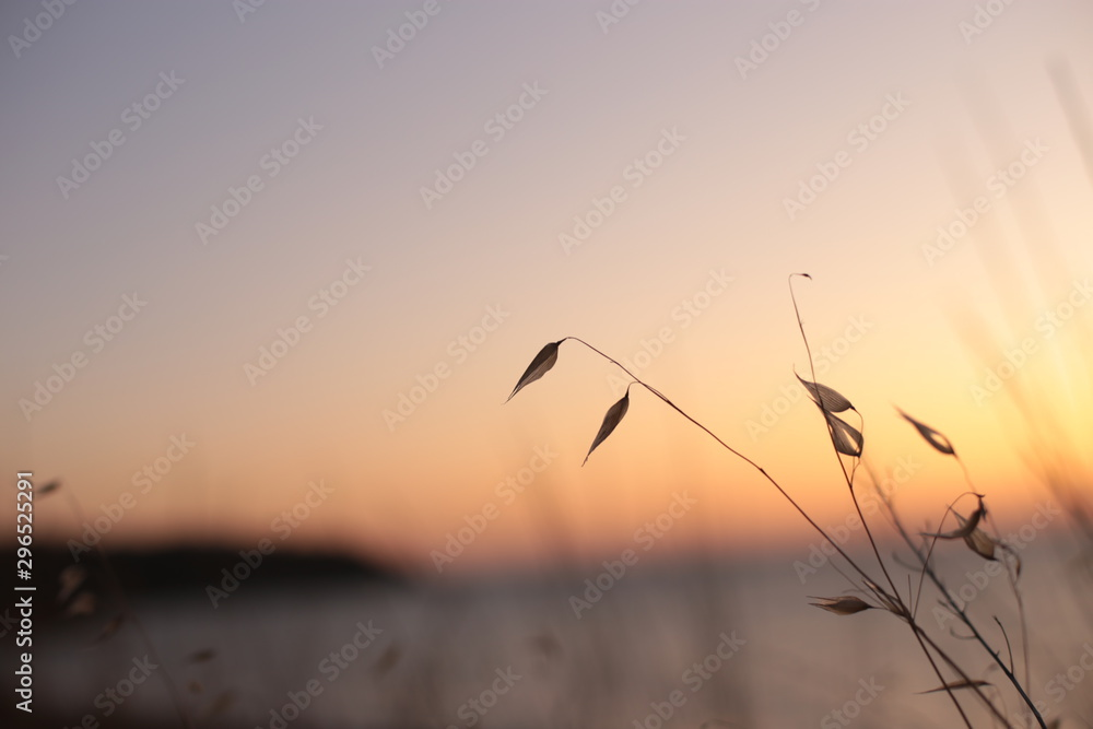 Fototapety, obrazy: landscape sunset on the sea grass and tree branches swaying in the wind, dawn and the ocean in the background
