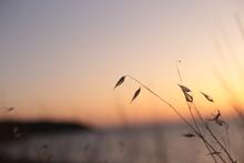 Landscape Sunset On The Sea Gr...